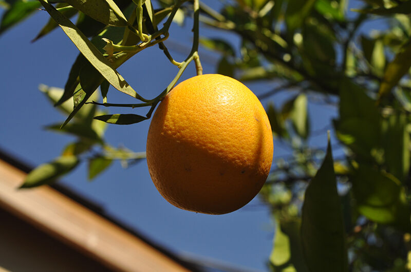 The Urban Farm_Orange