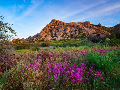 Wildflowers along the Feldspar Trail in Scottsdale's McDowell Sonoran Preserve