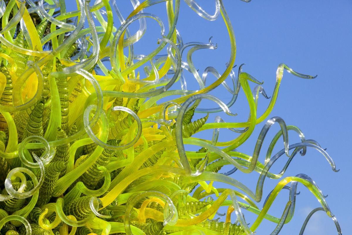 Dale Chihuly Sol del Citrón (detail), 2014 15 x 14½ x 14' Fairchild Tropical Botanic Garden, Coral Gables, Florida © 2021 Chihuly Studio. All Rights Reserved..jpg
