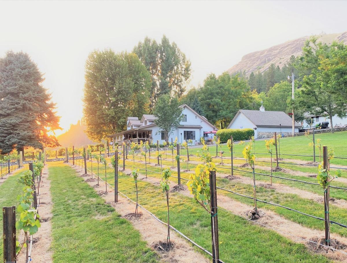 Sunset in vineyard photo