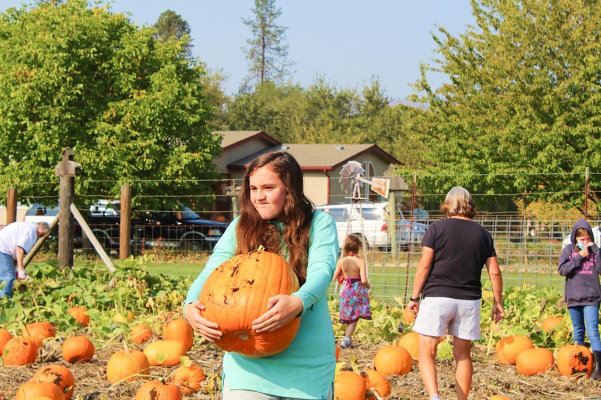 Pumpkin picking photo 1