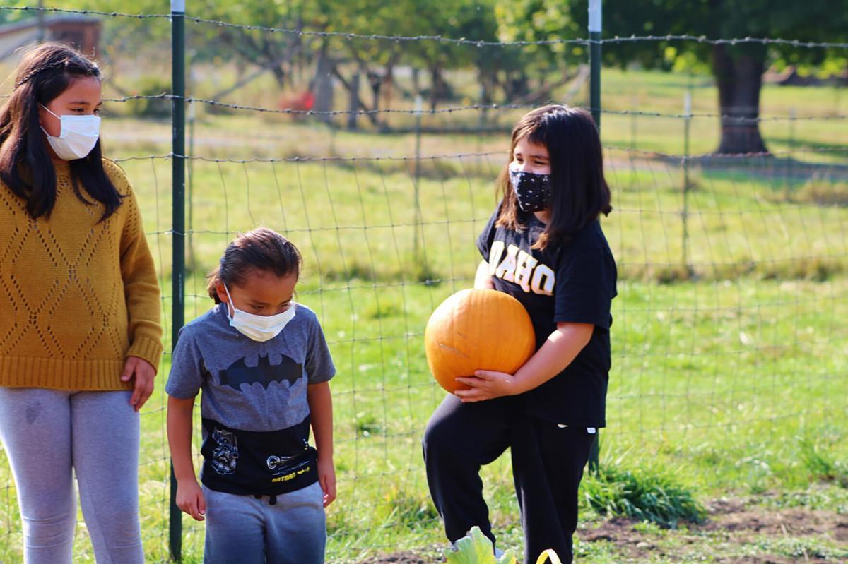 Pumpkin picking photo 2