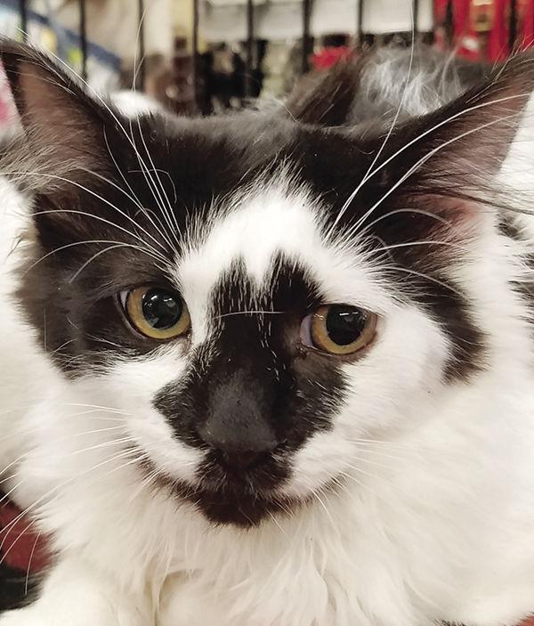 Humane Society kittens - b&w 2