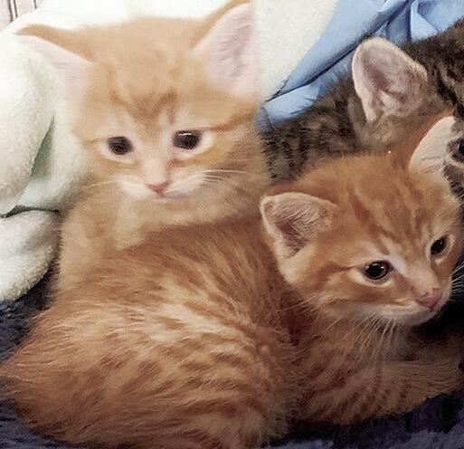 Humane Society--Kittys