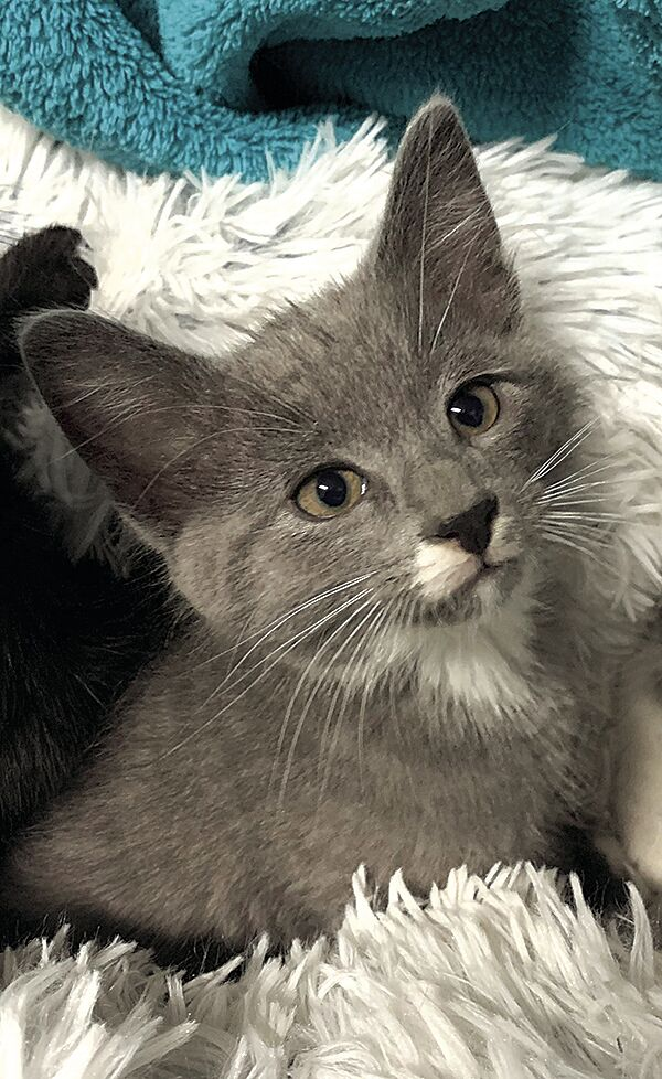 Humane Society-Kittens 4