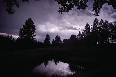 Shelby White lightning