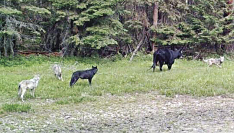 Wolfe photo 2