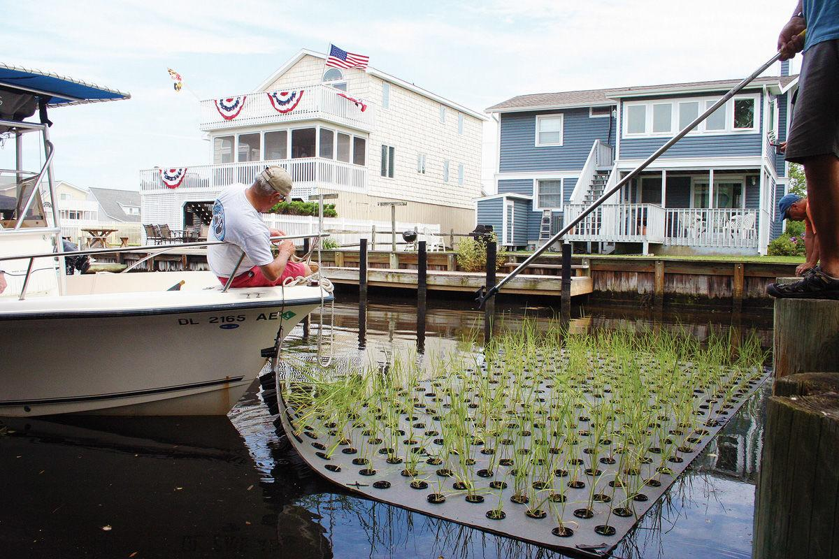 'They look like little floating islands': South Bethany upgrades canals, more plants, less soil