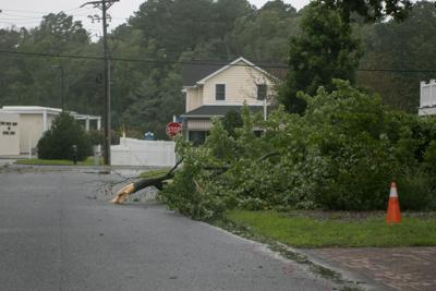 Large limb down in Bethany Beach