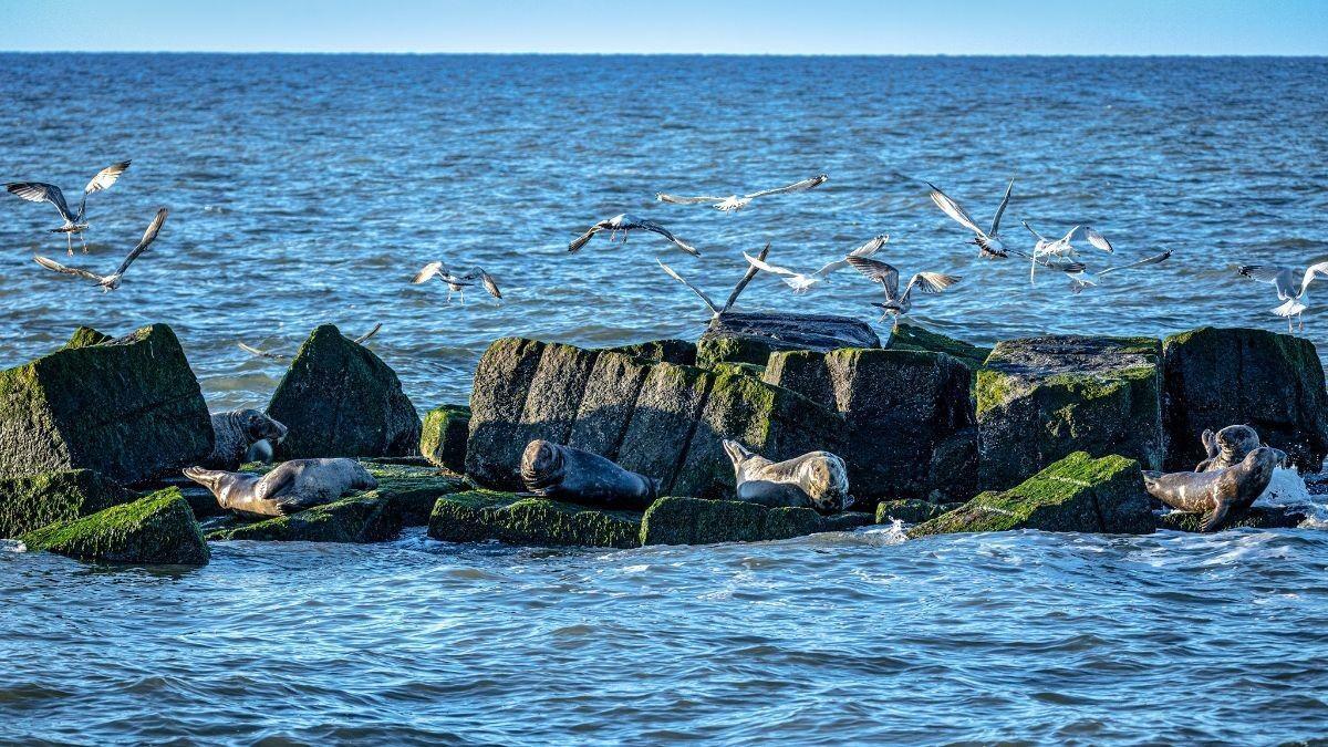 Birding Weekend_Seals Sunbathing_Scoters, Seals & Slightly Mightys boat trip 20210130_Matthew Trucks, See Scape Exposures