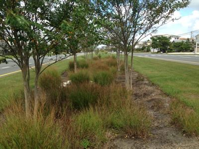 Bioretention facilities installed in the median in South Bethany in 2012