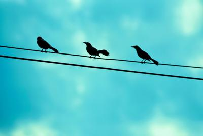 Birds on a wire (copy)