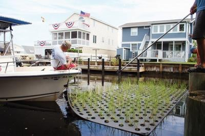 'They look like little floating islands': South Bethany upgrades canals, more plants, less soil (copy)