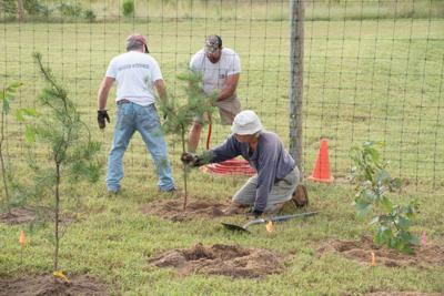 Volunteers plant 270 new trees at botanic gardens