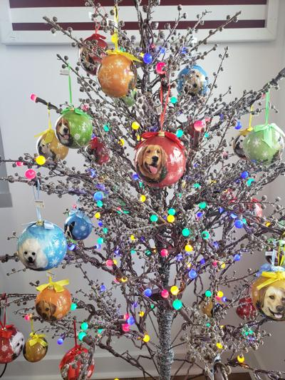 Sandy Pawz pet Christmas gift