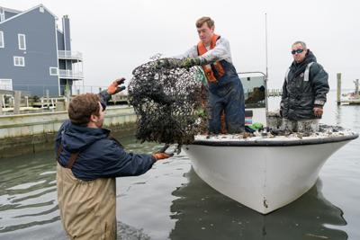 Crab pot removal - teamwork