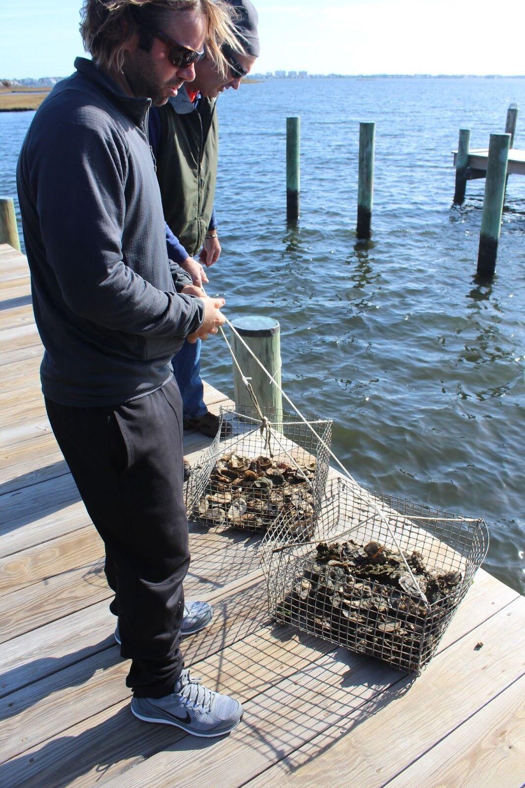 Oyster gardening 2.jpg