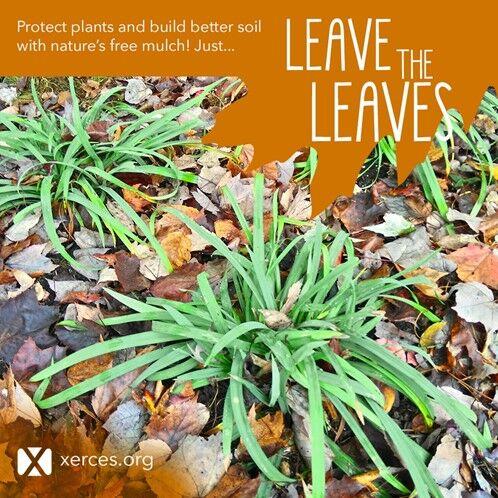 Natives leaves.jpg