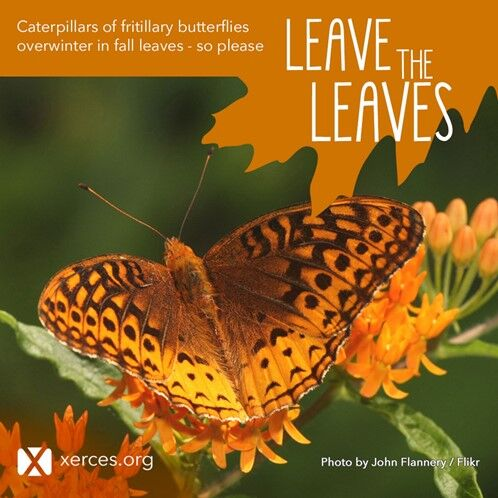 Natives butterfly.jpg