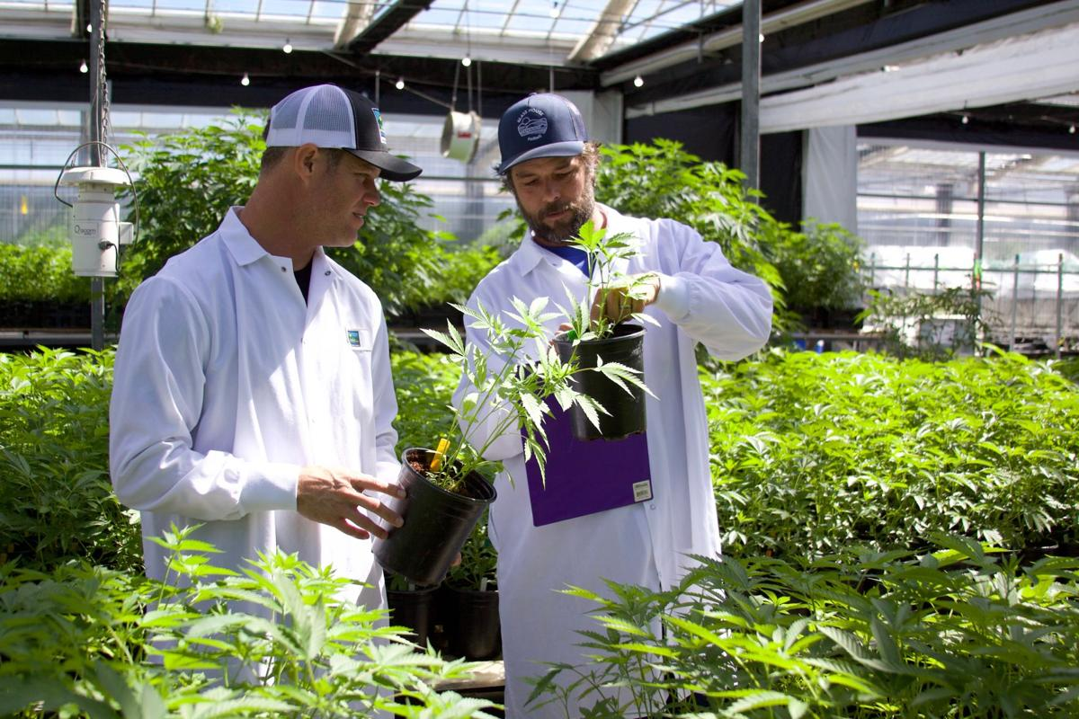 Pot permitting: Army of agencies brings cannabis into