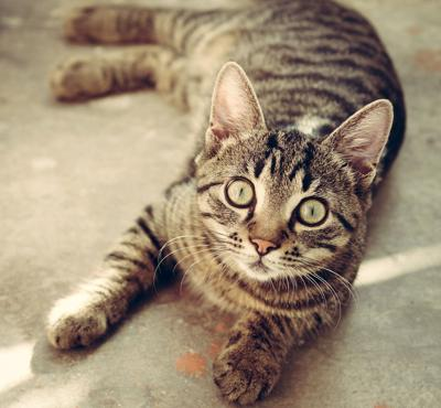 $5 cat spay or neuter