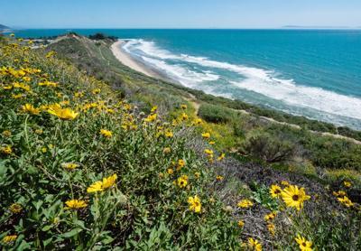 The Rincon Bluffs Preserve