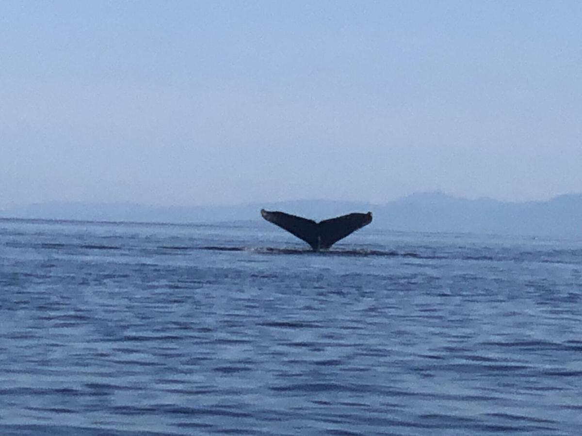 WhaletailHumpback.jpg