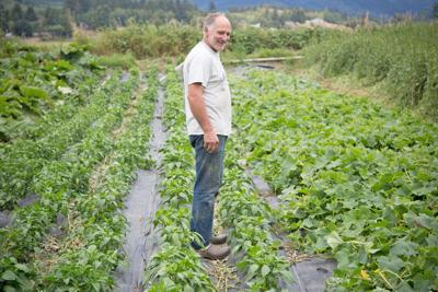 Competition puts pressure on small organic farms