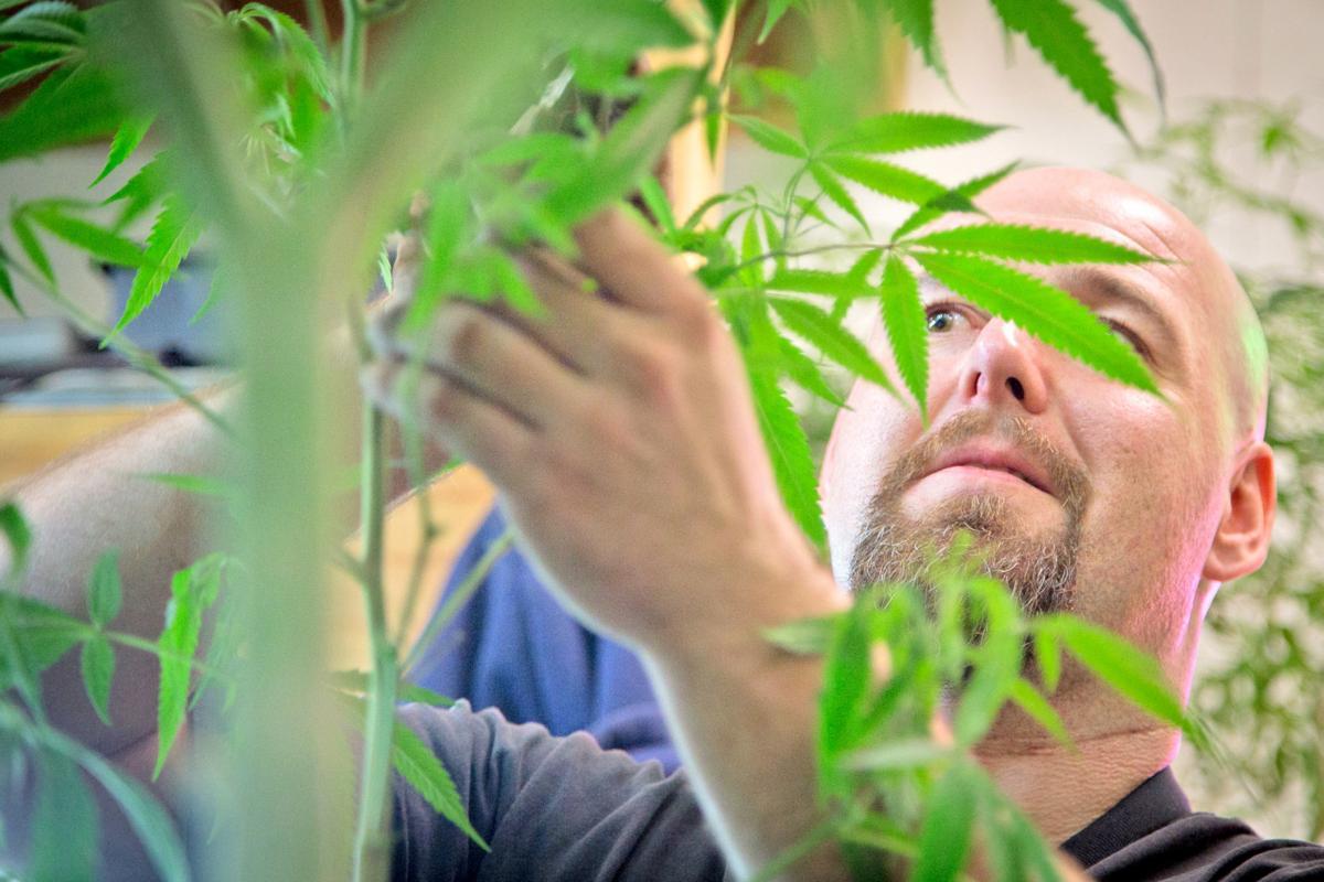 Vancouver Weed Company employee Stephen Daniel