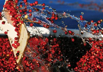 Judge hobbles cranberry antitrust lawsuit
