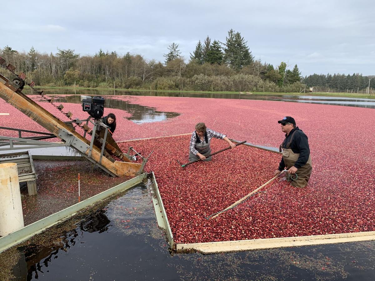 Cranberries-01.jpg
