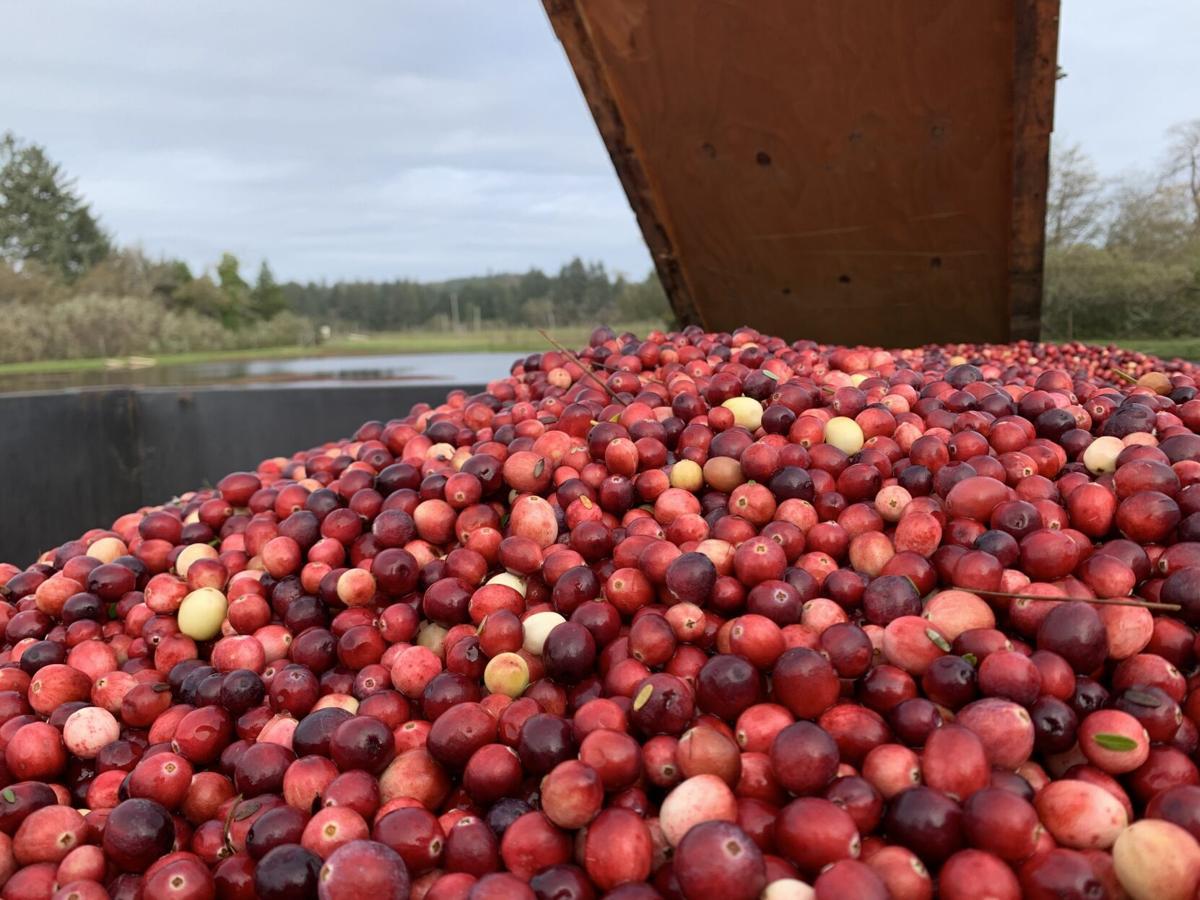 Cranberries-02.jpg