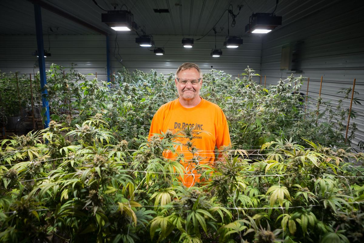 Coastal Growers owner Marty Junge stands between rows of mature marijuana plants