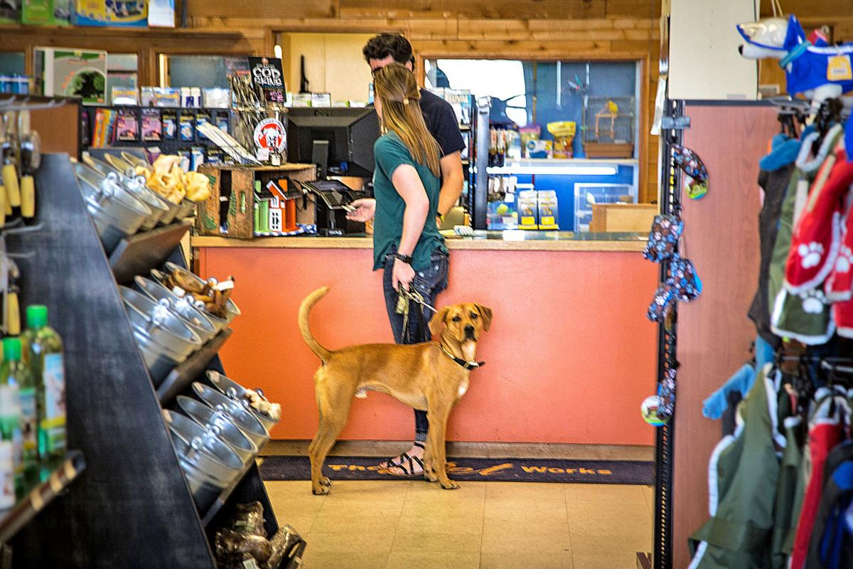 Dogs, cornerstones of the business
