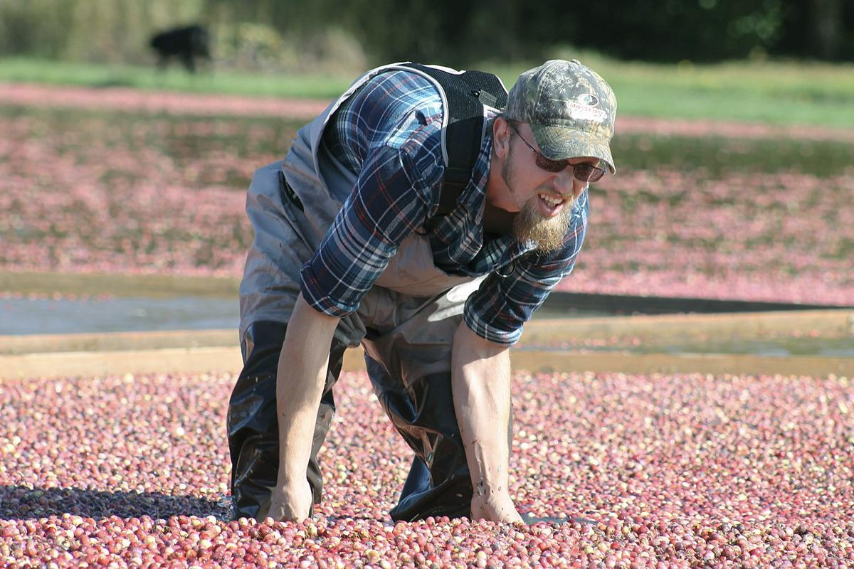 Cranberry farmers struggle with high supply, low prices