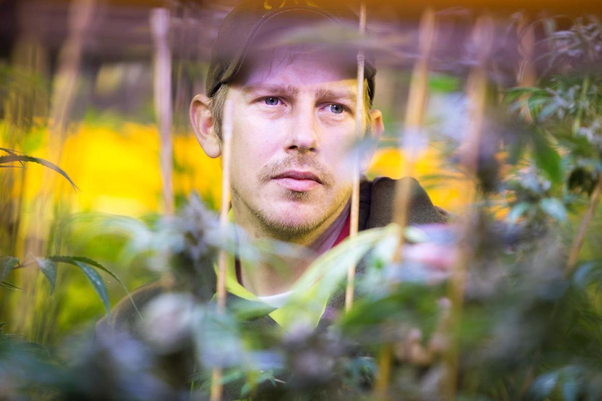 Vancouver Weed Company owner Gary Green is one of the few remaining tier-1 marijuana growers in Pacific County