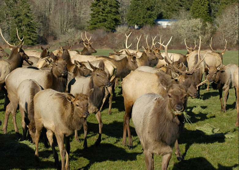 Prototype fences could keep elk at bay