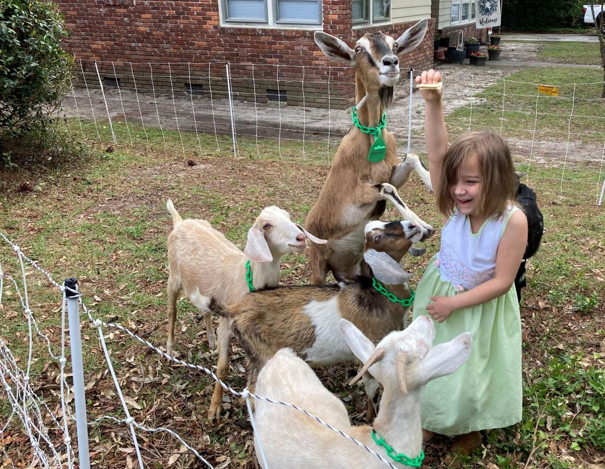 Lilith Rose gives goats treats.JPG