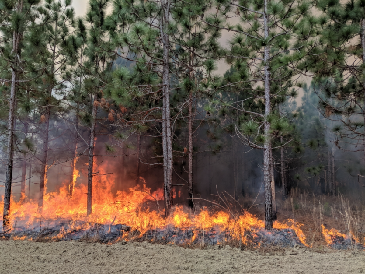 forestry prescribed burn.png