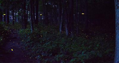 congaree national park fireflies