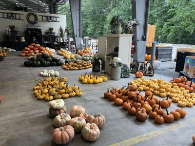 sc state farmers market fall pumpkins