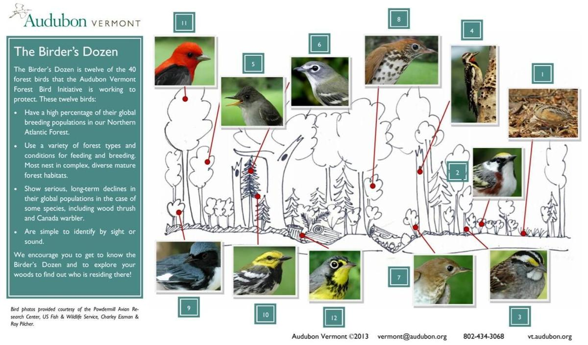 Audubon Bird Graphic