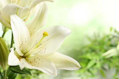 funeral flower 3