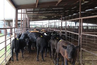 Livestock Auction Barn Closeup