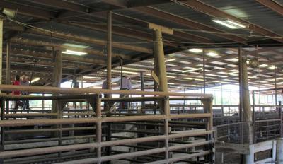 livestock auction october 2019