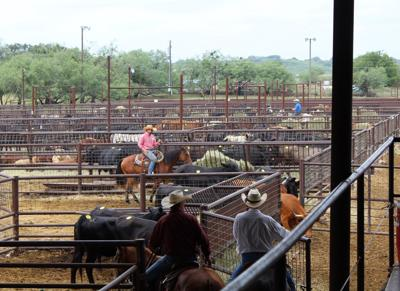 Livestock Auction Barn pens