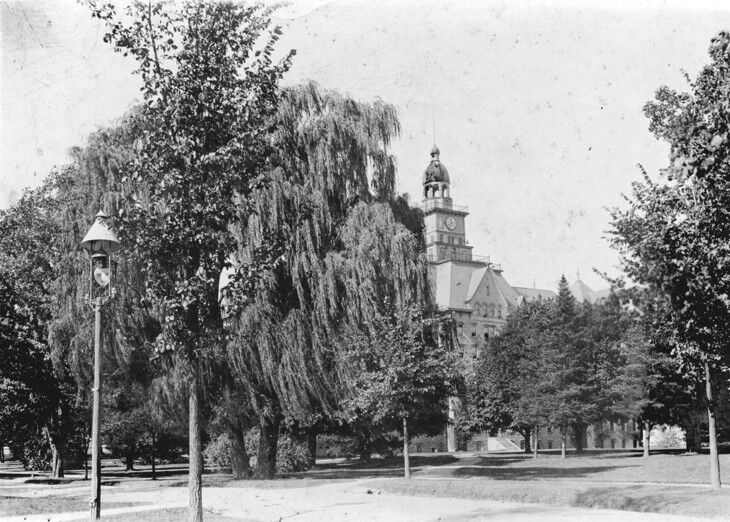 Old Willow historical