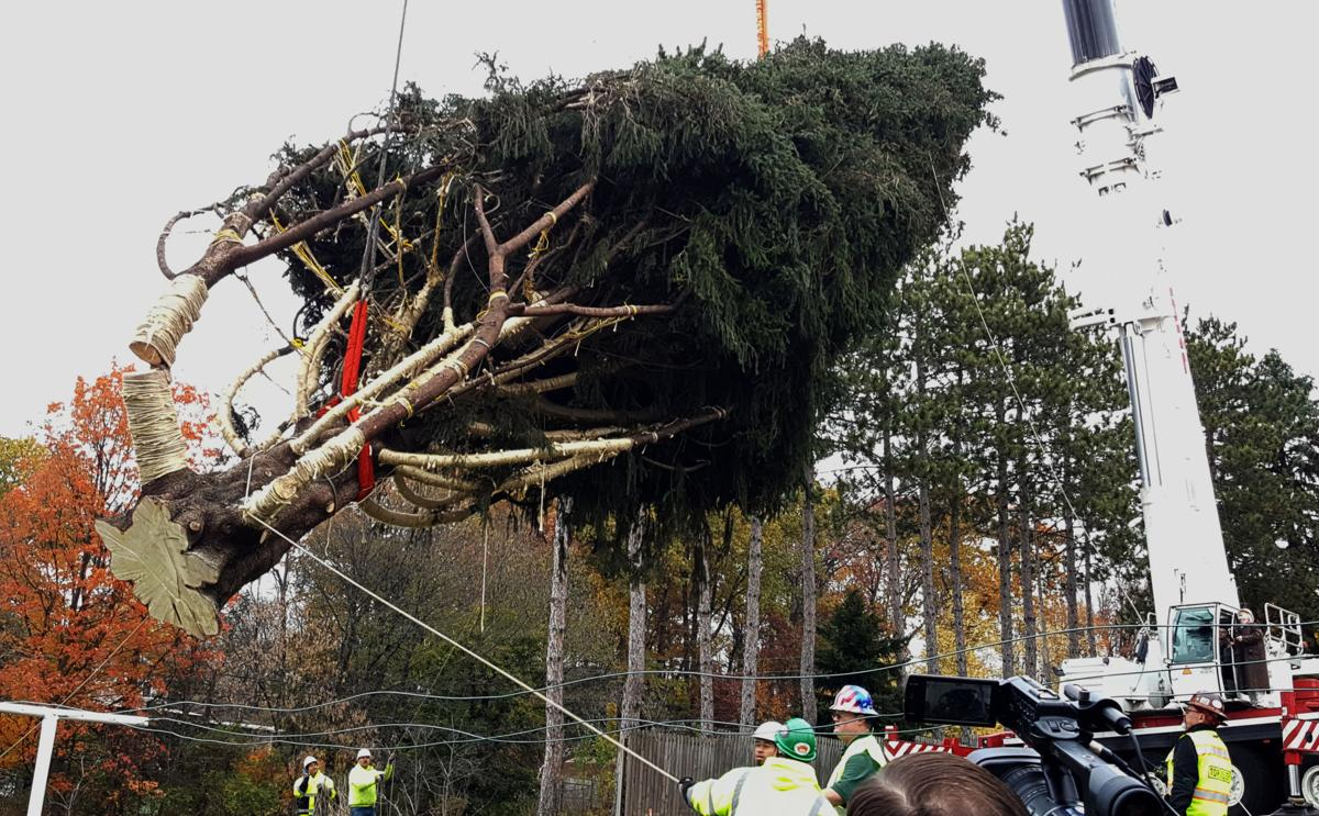 1 2 7 3 Down The Rockefeller Street: 'It's Goin' Down': A State College Spruce Tree Is Headed