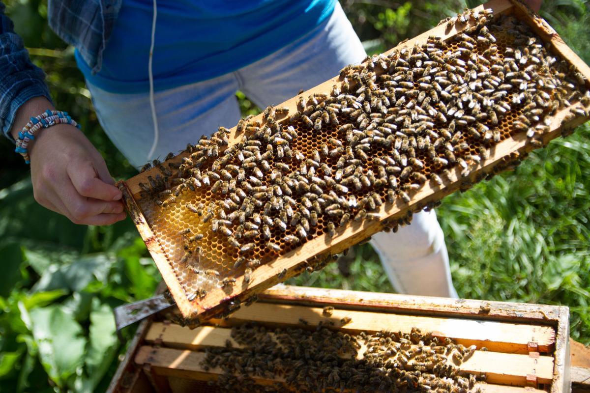 FT Beekeepers club