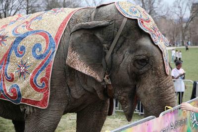 Elephant Holi